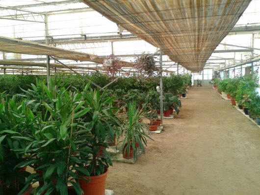 plants and fresh vegetables in qatar chato carlos castillo. Black Bedroom Furniture Sets. Home Design Ideas